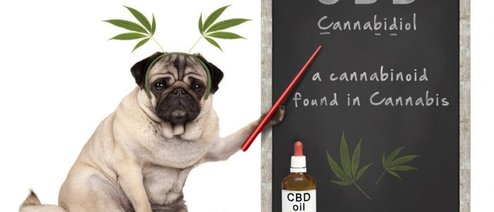How To Avoid A Scam When Buy Cbd For Dogs?