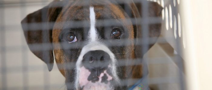 Use Your Pet Dog Crate And You Should Never Repent It
